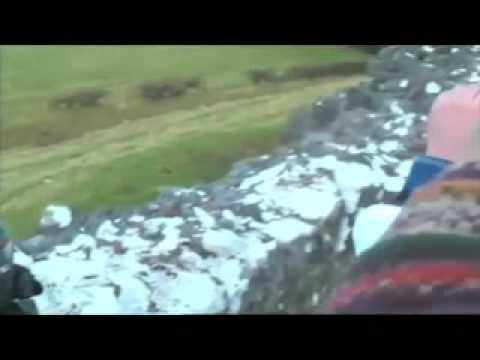 Arte con ovejas - anuncio samsung LED