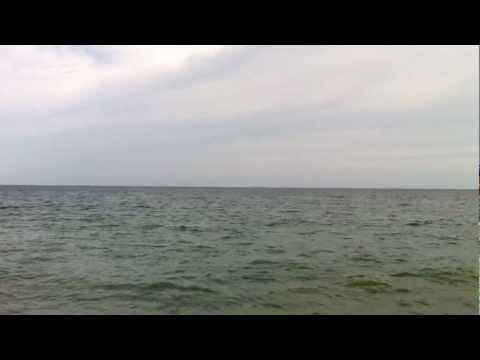 extraña criatura en playa de almeria
